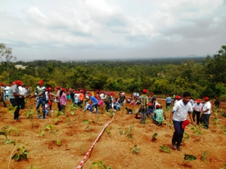 Overview of the Afforestation activity